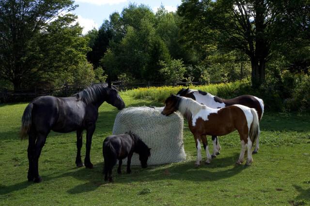 Bale Buddy Horse Pasture Slow Feeders