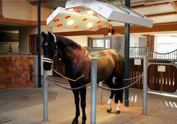 equine solarium