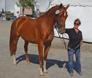Horse Property Broker