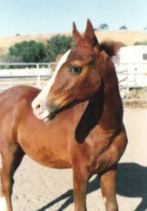 Horse Story Blog