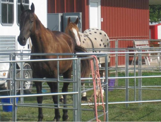 Travel N Corrals on Stable.com