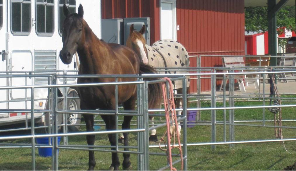 Travel N Horse Corrals – portable horse corrals