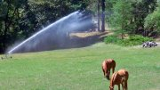 Big Sprinkler on Stable.com