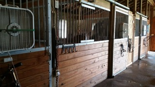18+ Acres, Beautiful Facility with Indoor Arena, 4 Bedroom, 2.5 bath Ranch Home, Albion Twp, MI