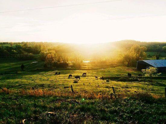 62 Acre Working Ranch on Southfork River in Salem, Arkansas