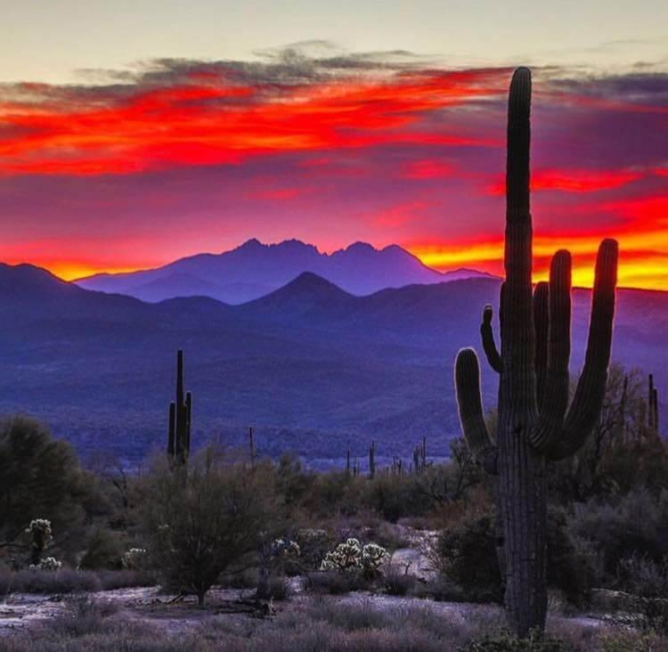 Arizona Horse Property Michelle Shelton