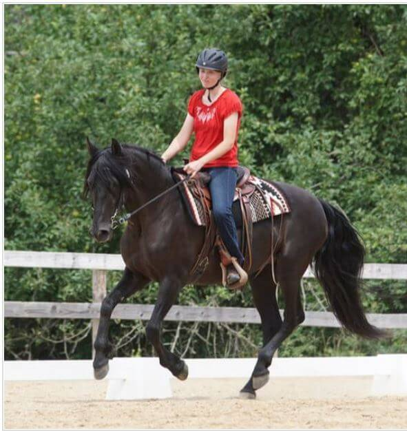 Cessna Stables Riding Lessons near Cleveland Ohio