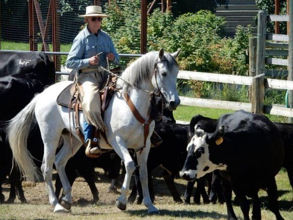 Montana Horse Property, BHHS Montana Ranch Properties