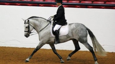 horse for sale on Stable.com