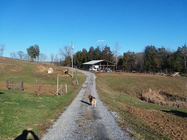 Tennessee Horse Property for Sale