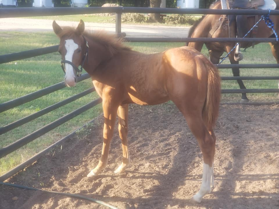 2019 Athletic Filly