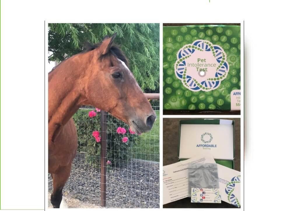 5 Strands Affordable Equine Testing